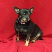 Adopt A Pet :: Millie($75) - Redding, CA