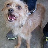 Adopt A Pet :: Triscuit - Castro Valley, CA