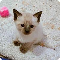 Adopt A Pet :: Queenie - Smyrna, GA