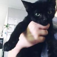 Adopt A Pet :: Hyde - Fresno CA, CA