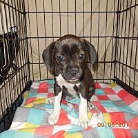 Adopt A Pet :: Maggie - Algonquin, IL
