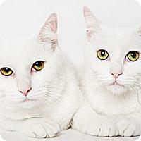 Adopt A Pet :: Edmond - New York, NY