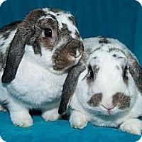 Adopt A Pet :: Didi & Chuckie - Los Angeles, CA