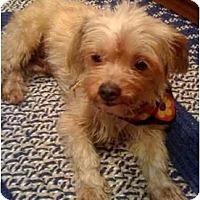 Adopt A Pet :: Miley - West Palm Beach, FL