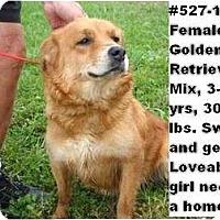 Adopt A Pet :: # 527-11 @ Animal Shelter - Zanesville, OH