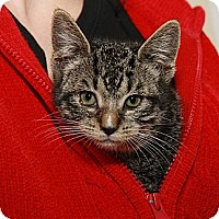 Adopt A Pet :: Admiral Tinybritches - Syracuse, NY