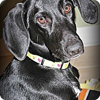 Adopt A Pet :: Magpie - Hagerstown, MD