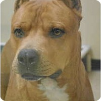 Adopt A Pet :: Mack Truck - Plano, TX
