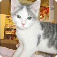 Adopt A Pet :: Socrates - Jenkintown, PA