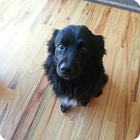Adopt A Pet :: Franco - Saskatoon, SK