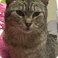 Adopt A Pet :: Bunny - Kelso/Longview, WA