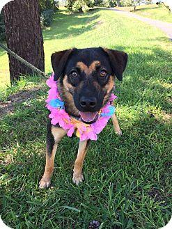 Retriever (Unknown Type)/Labrador Retriever Mix Dog for adoption in Grafton, Wisconsin - Goldie