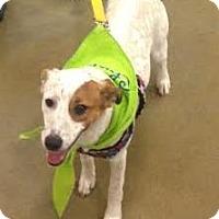 Adopt A Pet :: Cash - Valley Falls, KS