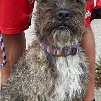 Adopt A Pet :: Harrison - San Pedro, CA
