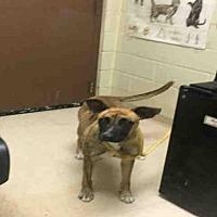 Adopt A Pet :: TILLY - Rogers, AR