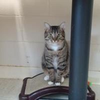 Adopt A Pet :: Kerry - Erie, PA
