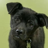 Adopt A Pet :: Carla - West Allis, WI