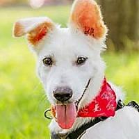 Adopt A Pet :: Kody - San Francisco, CA