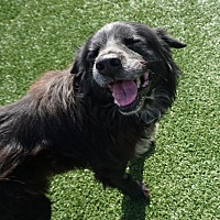 Adopt A Pet :: Brent (HW+) - North Richland Hills, TX