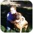 Photo 2 - Bullmastiff Dog for adoption in LAS VEGAS, Nevada - Charlie