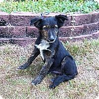 Adopt A Pet :: Shep *VIDEO* - Columbia, SC