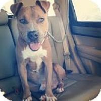 Adopt A Pet :: Pele - Chicago, IL