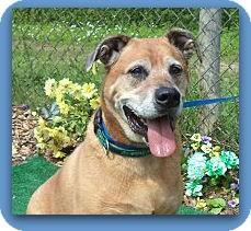 German Shepherd Dog/Labrador Retriever Mix Dog for adoption in Marietta, Georgia - BRADY