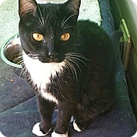 Adopt A Pet :: Binx - Marietta, GA
