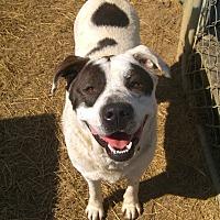 Adopt A Pet :: Bama - Nashville, GA