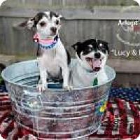 Adopt A Pet :: Lucy - Shawnee Mission, KS