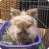 Adopt A Pet :: Thunder - Williston, FL