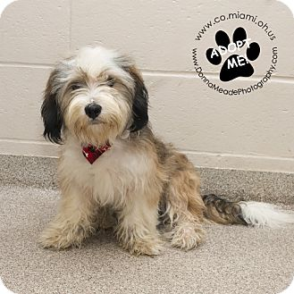 Terrier (Unknown Type, Small) Mix Dog for adoption in Troy, Ohio - Donald-Adoption Pending