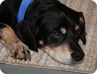 Spaniel (Unknown Type) Mix Dog for adoption in Marietta, Ohio - Woody (Neutered)