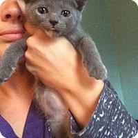 Adopt A Pet :: Tasha - Chicago, IL