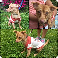 Adopt A Pet :: Manny - Hicksville, NY