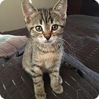 Adopt A Pet :: Magdelena (Maggie) - Bulverde, TX