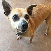 Adopt A Pet :: Jackie - San Ramon, CA