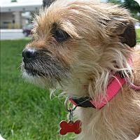 Adopt A Pet :: Sweetie - Meridian, ID
