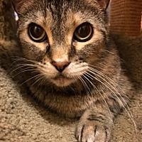 Adopt A Pet :: Timber - West Palm Beach, FL