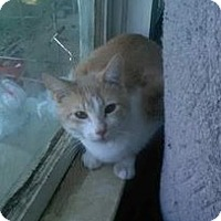 Adopt A Pet :: Tigger- Courtesy Post (McDowell) - Asheville, NC