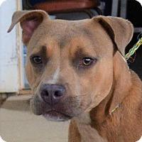 Adopt A Pet :: Beans - Allentown, NJ