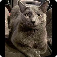 Adopt A Pet :: Merrie - Arlington, VA