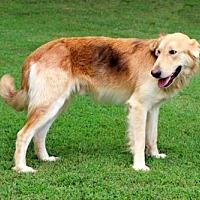 Adopt A Pet :: LEVI - richmond, VA
