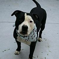 Adopt A Pet :: Derek - Dublin, CA
