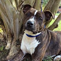 Adopt A Pet :: Radar - Goodlettsville, TN