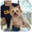 Photo 2 - Yorkie, Yorkshire Terrier Dog for adoption in Baton Rouge, Louisiana - Sugar