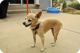 Chihuahua Mix Dog for adoption in Ogden, Utah - Princess