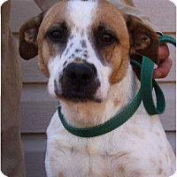Australian Cattle Dog Mix Dog for adoption in Godfrey, Illinois - Lulu