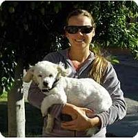Adopt A Pet :: Rascal - Albuquerque, NM
