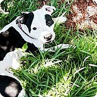 Adopt A Pet :: Pearl - Lake Worth, FL